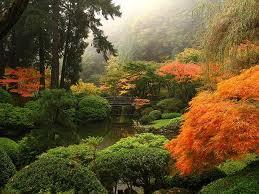 garden conifere